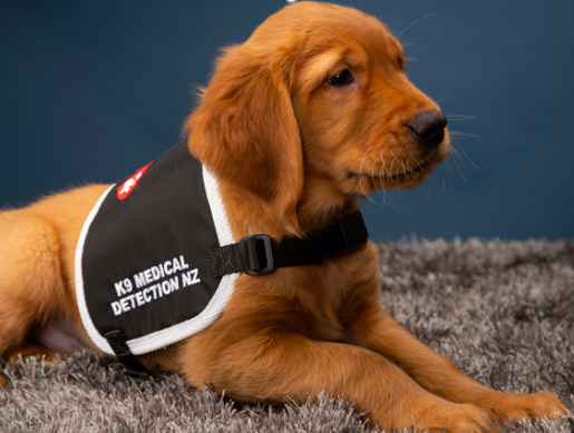 Lindsay Foundation Partners with K9MD to take on a second killer cancer